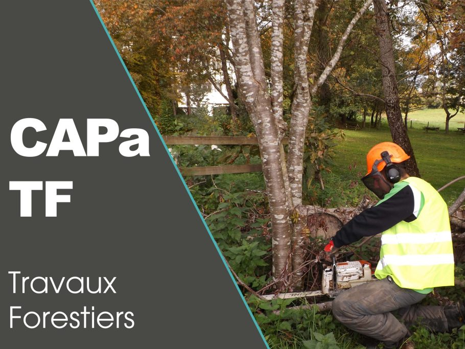 CAPa TF Travaux Forestiers