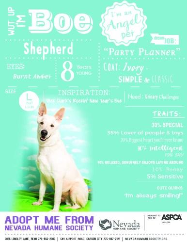 Angel Pets Poster - Boe the Dog 3-23-17 Final LG