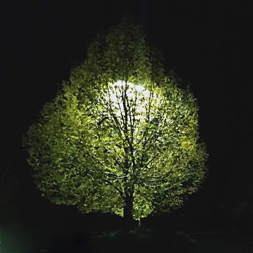 Tree Light (c) Christy Ramsey 2016