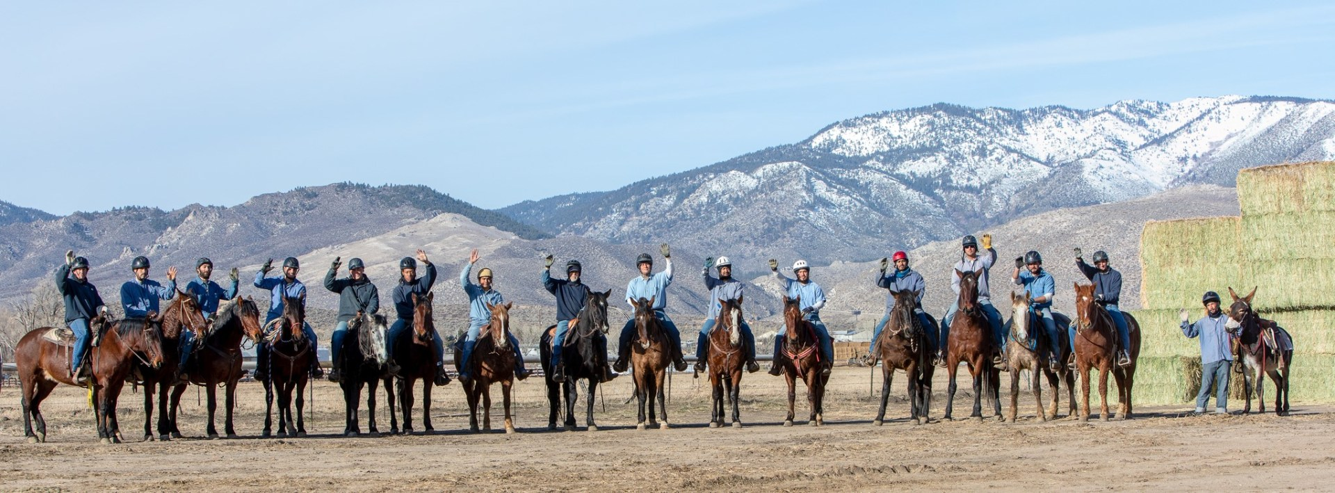 Group photo of the horses and burro that will be available at the February 22, 2020 adoption. Image: BLM.