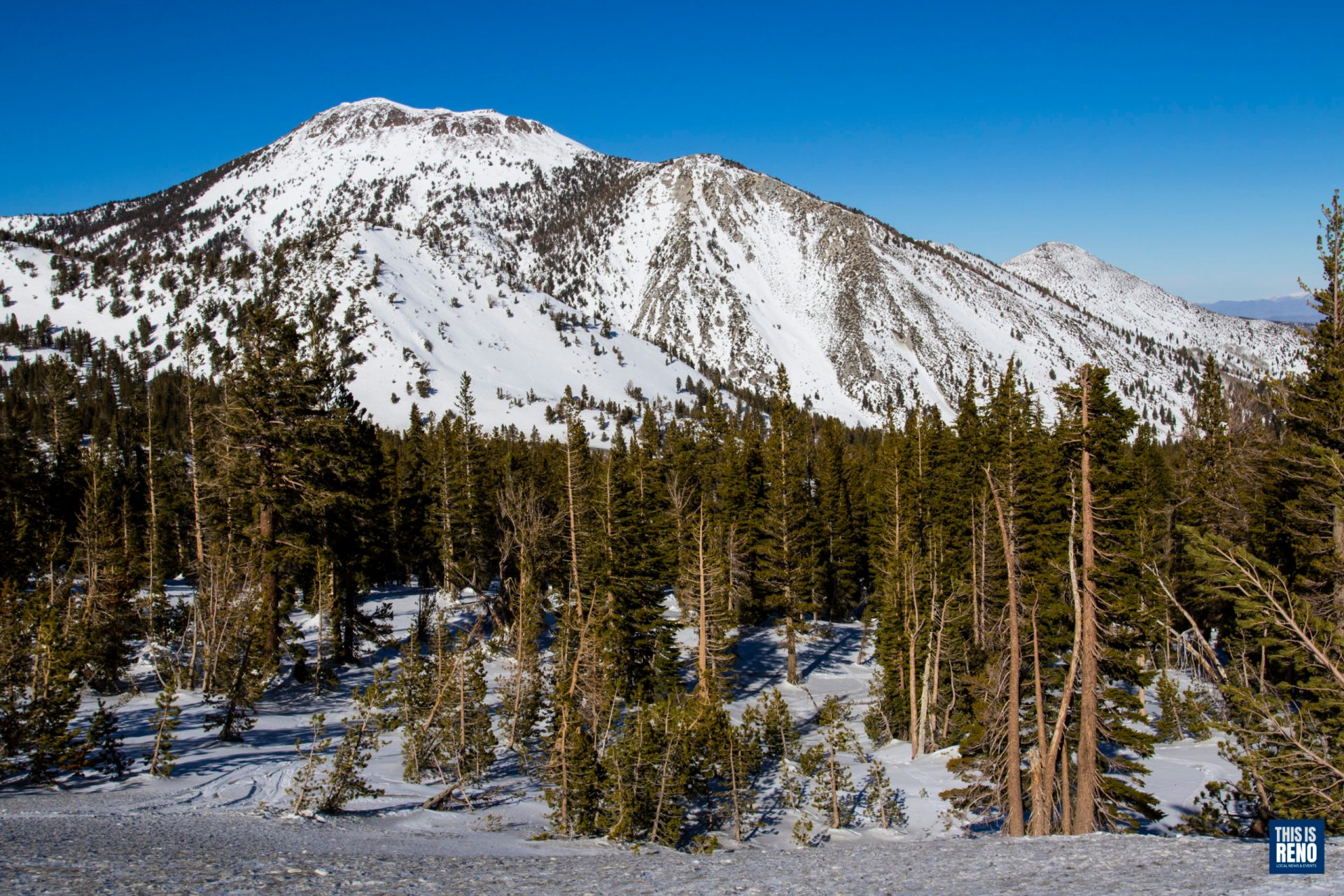 The Sierra snowpack in January 2020. Image: Ty O'Neil