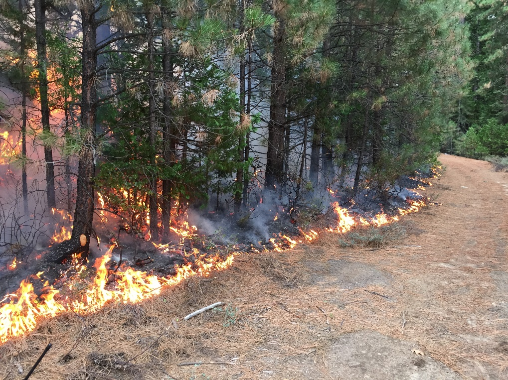Underburning allows land managers to return low intensity fire to the landscape, which mimics natural fire and provides important benefits to forest health. Photo credit: Eldorado National Forest.