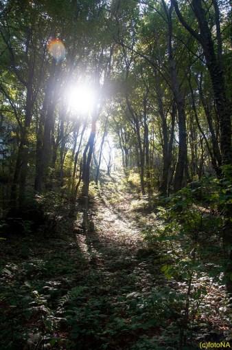 Šumski pejzaž Kalnika