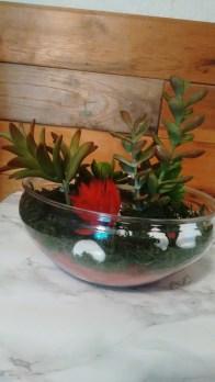 Succulents | neveralonemom.com