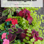 shade plants for hummingbirds