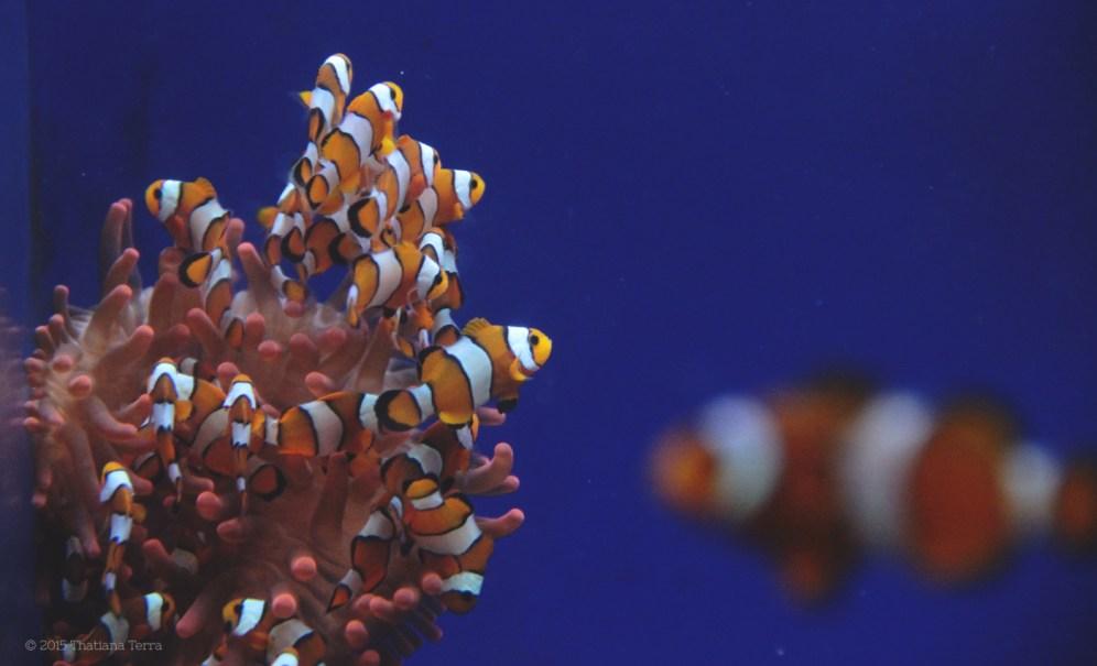 Genova: Underwater (3)