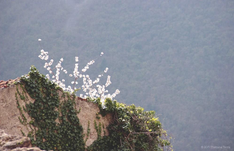 Balestrino: The abandoned village (14)