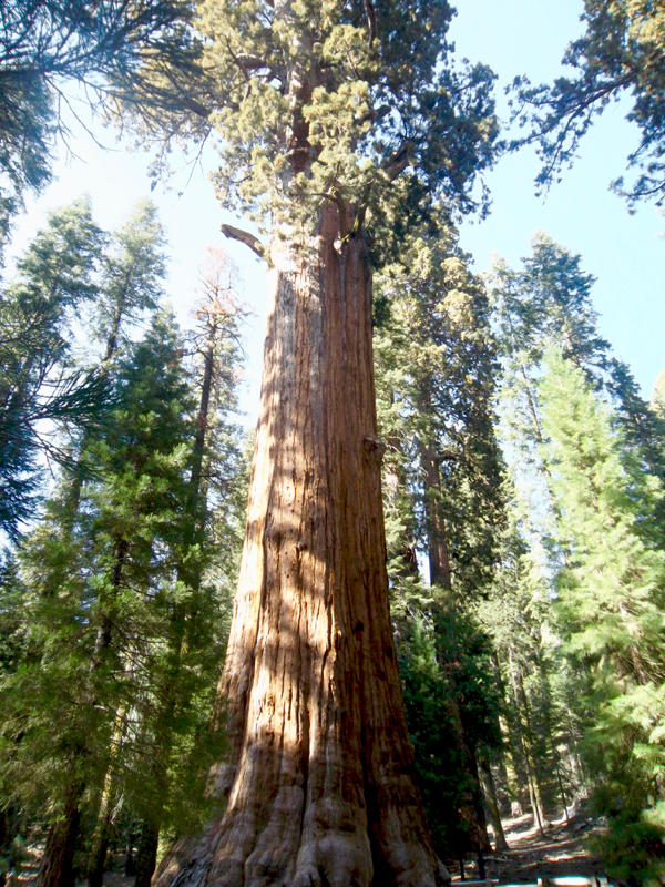 Sequoia National Park Travel Tips from NeverEndingJourneys.com
