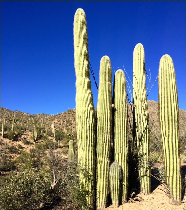 Awesome Things to do in Arizona That Aren't National Parks
