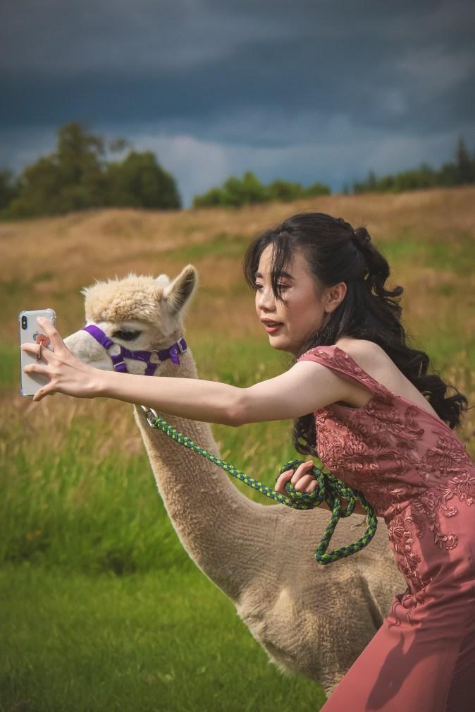 wedding alpaca unusual