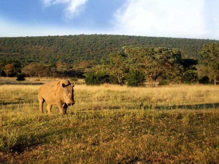 african-safari-2-1372235-1600x1200