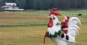 Sequim Santa and chicken display