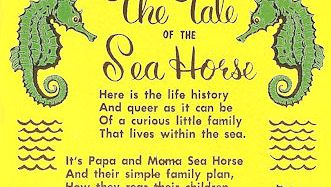 The Tale of The Seahorse corny postcard
