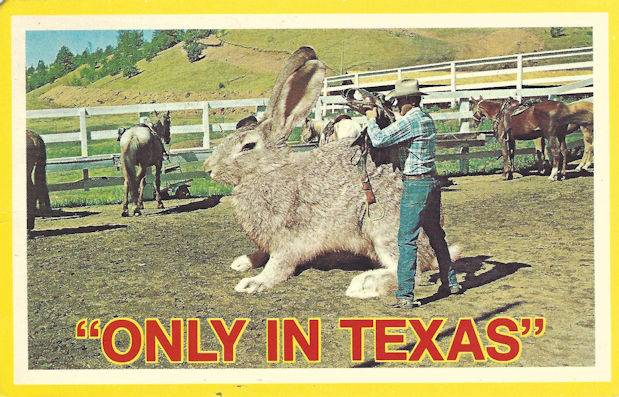 GIANT HARE Texas postcard