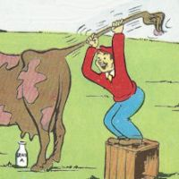 COMIC POSTCARD, vintage, milking a oow