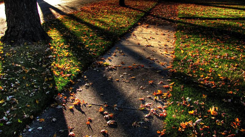 Shadows through the leaves
