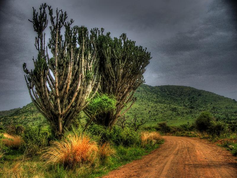 African bush trees