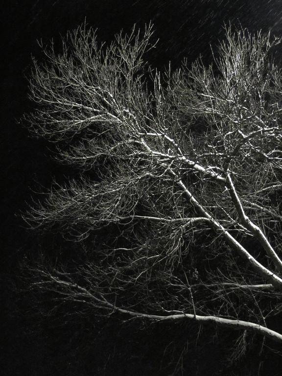 Weather, tree