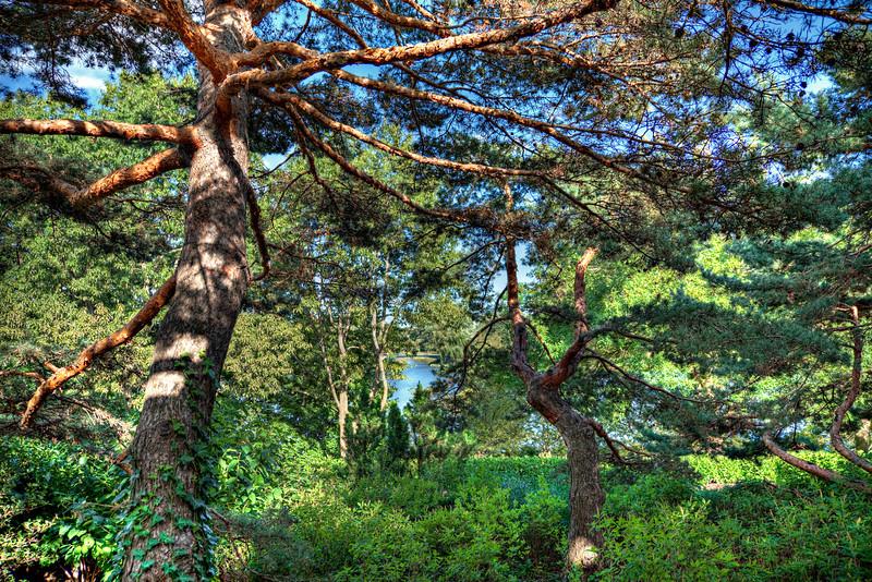 The sensory garden