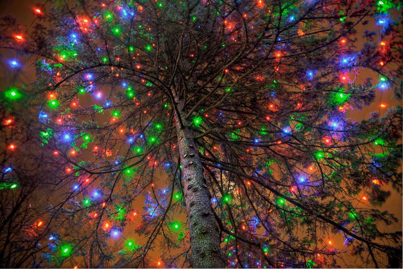 Under the gigantic Xmas tree