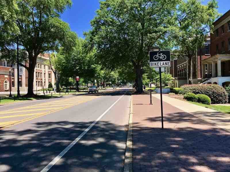 Tree lined Streets of the University of Alabama | nevertooldtotravel.com | Gary House