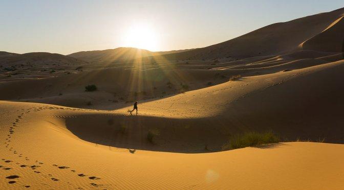 Dune (Frank Herbert)