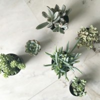 DIY Succulents for Mother's Day
