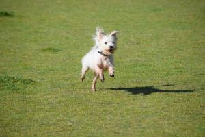 emmett_big_special_smile_running