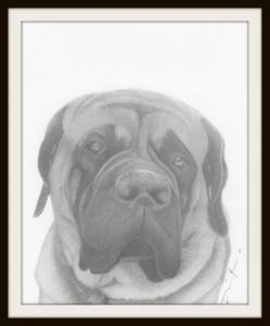 graphite drawing by Dave Nevue - How to Sell Drawings Online