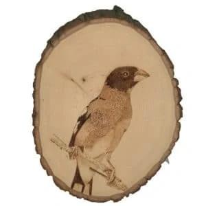 Oriole Bird Wood Burning