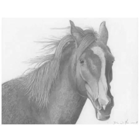 Rosey Bear Horse Drawing