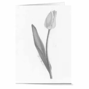 12 Enjoying The Day Tulip Greeting Cards