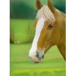 Sunny Chestnut Horse