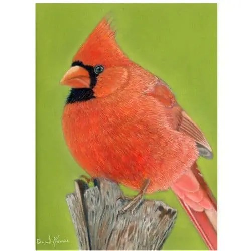Cardinal Pastel Drawing Winters Coming Original