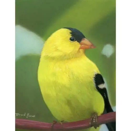Good Morning Sunshine American Goldfinch Pastel Painting