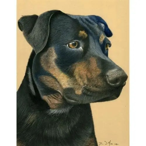 Commission Southern Belle Dog Pastel Painting