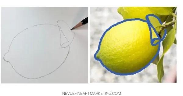 drawing lemon leaf