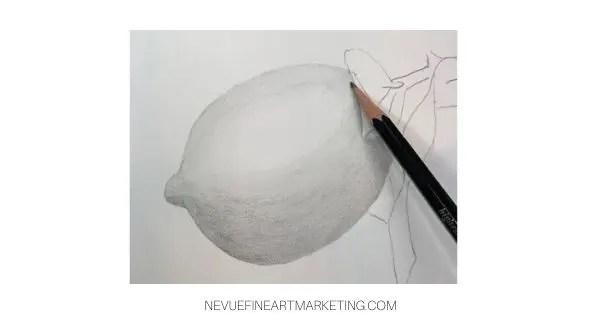 drawing a lemon leaf