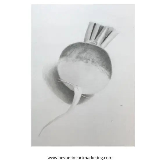Radish pencil drawing