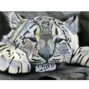 Snow Leopard Cub Pastel Painting