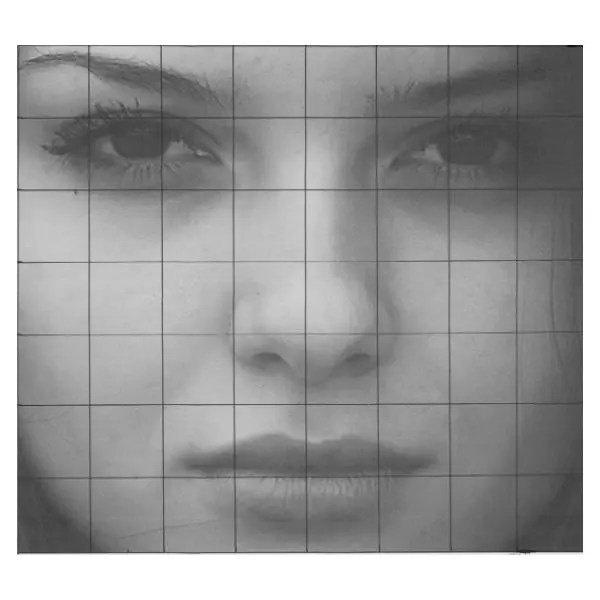 draw a nose outline with grid