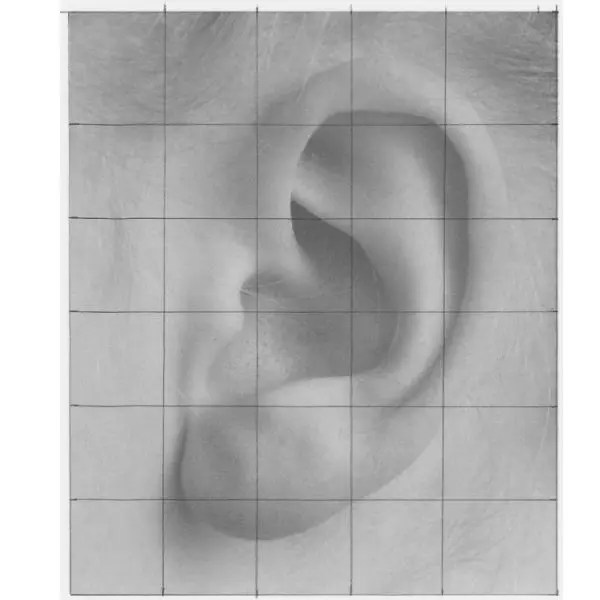 draw an ear with grid