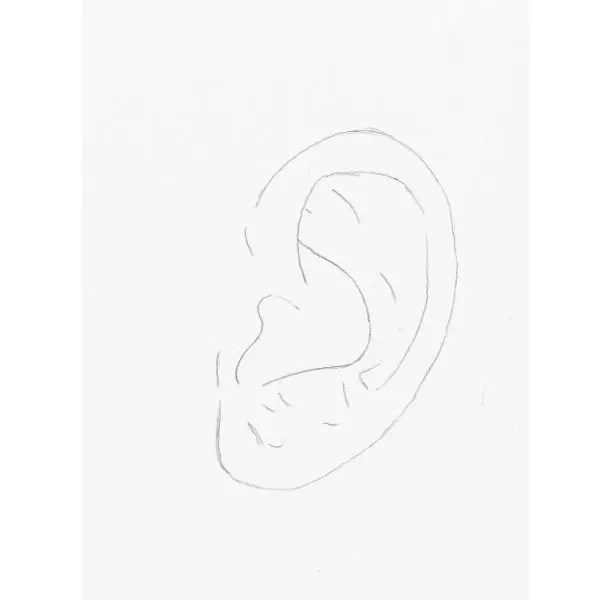 ear line drawing