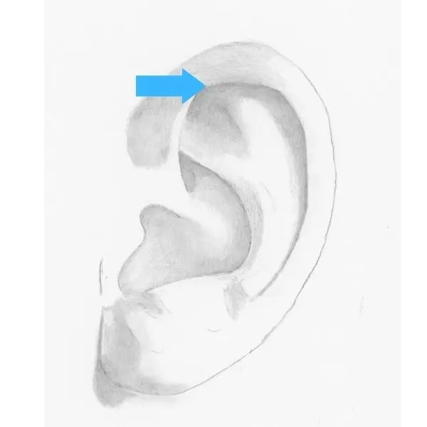 draw an ear step 5