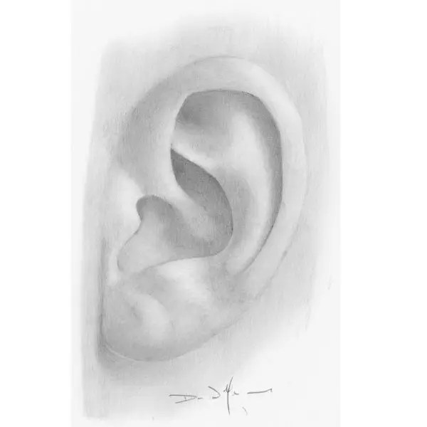 ear drawing tutorials