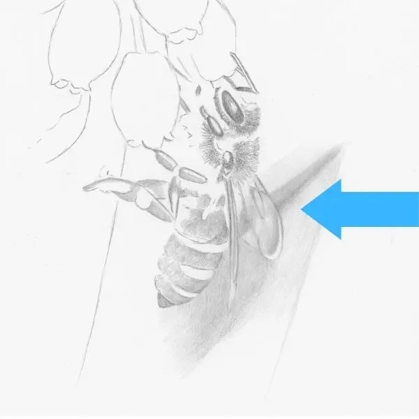drawing a bee step 5