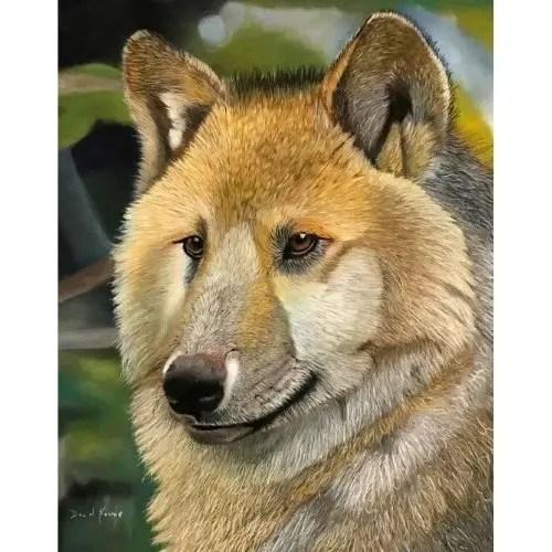 Hudson Bay Wolf Pastel Painting