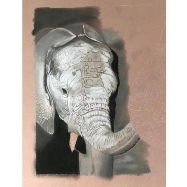 draw an elephant