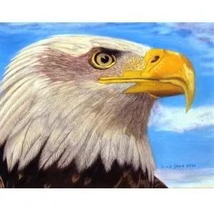 Valiant Spirit – Bald Eagle Giclee Prints