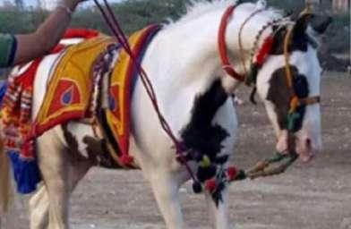 Horse Fair Devraj Horse